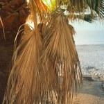 Palm sunset — Stock Photo