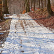 Winter road in the forest - Stock Photo