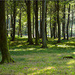Summer forest — Stock Photo #6562797
