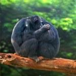 Monkey love — Stock Photo