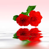 Red roses reflecting in rippled water — 图库照片