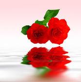 波纹水中反映出的红玫瑰 — 图库照片
