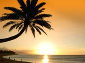 Icon tropical sunset — Stock Photo