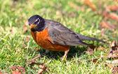 Vogel im Sonnenschein — Stockfoto