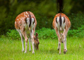 Deer in the forest — Stock Photo