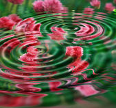 波纹的花 — 图库照片