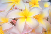 Hawaiian flower dreams — Stock Photo