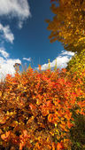 Autumn colors — Stock Photo
