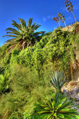 Jardín tropical — Foto de Stock