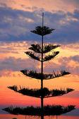 Beautiful tropical sunset — Stock Photo