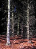 Bos in de herfst — Stockfoto