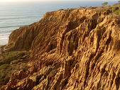 Torrey Pines — Stock Photo