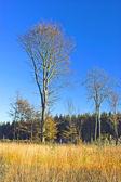 Early autumn peace — Stock Photo