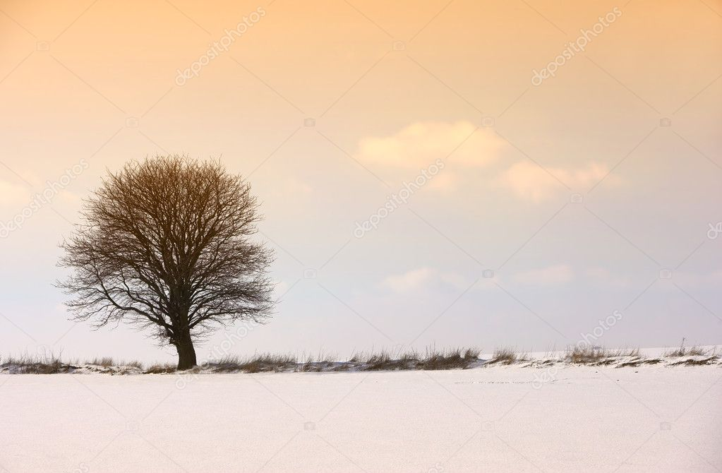 Lonely wintertree at sunset — Stock Photo #6561706