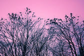 Birds and trees — Stock Photo