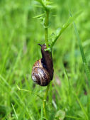 Snail on the flower — Stock Photo