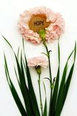 Pink Hope Carnations — Stock Photo