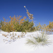 Stock Photo: White Sands National Park