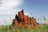 Termite Mound — Stock Photo