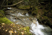 Stream in Robson Valley — Stock Photo