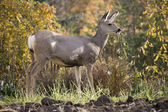 Deer in garden — Stock Photo