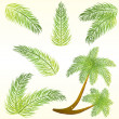 Stock Vector: Tropical palm leaves