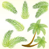 Feuilles de palmier tropical — Vecteur