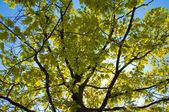 Groene bladeren in het voorjaar van — Stockfoto