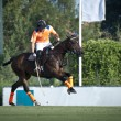 Polo Player — Stock Photo #6631877