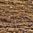 Dry grass — Stock Photo