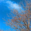Branches of a tree against the sky — Stock Photo