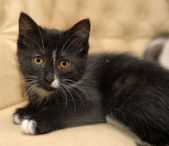 Black and white male cat — Stock Photo