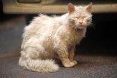 Miss fortune homeless animal — Stock Photo