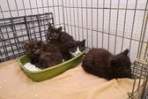 Four kittens — Stock Photo