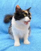 Three-colored cat — Stock Photo