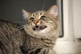 Gray striped cat — Stock Photo