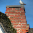 Thatched roof with seagull — Stock Photo