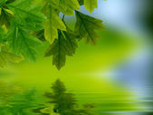 Leaves reflecting in water — Stock Photo