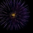 A burst of purple fireworks against a night sky. — Stock Photo #5466625