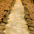 Walk way  with stone in the forest - Stock Photo