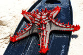 Sea star on the sand — Stock Photo