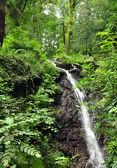 Waterfall of stresa — Stock Photo