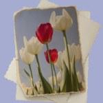 Vintage photo with tulips — Stock Photo #6320714