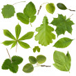 Collection green tree leaves — Stock Photo