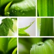 Collage nature green background. — Stock Photo