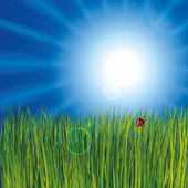 Ladybird in the grass on cloudy sky background — Cтоковый вектор