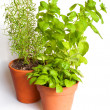 Royalty-Free Stock Photo: Herbs in Pots