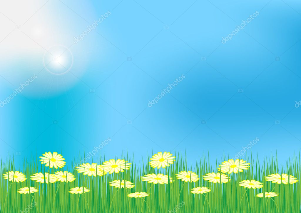 Spring / Summer Background - Meadow With Grass and Oxeye Daisy Flowers  Stock Vector #6091286