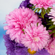 dahlia flowers — Stock Photo