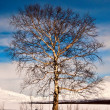 Tree in winter — Stockfoto #5391924